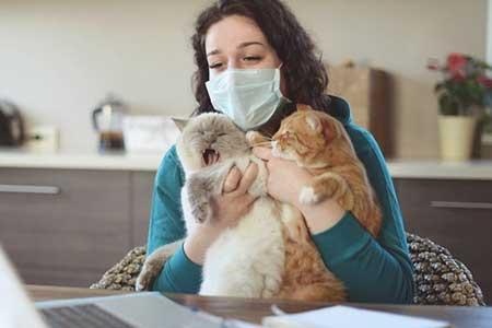 حیوانات خانگی ناقل ویروس کرونا نیستند