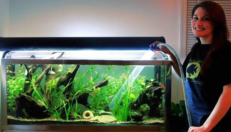نحوه تمیز کردن آکواریوم ماهی در خانه