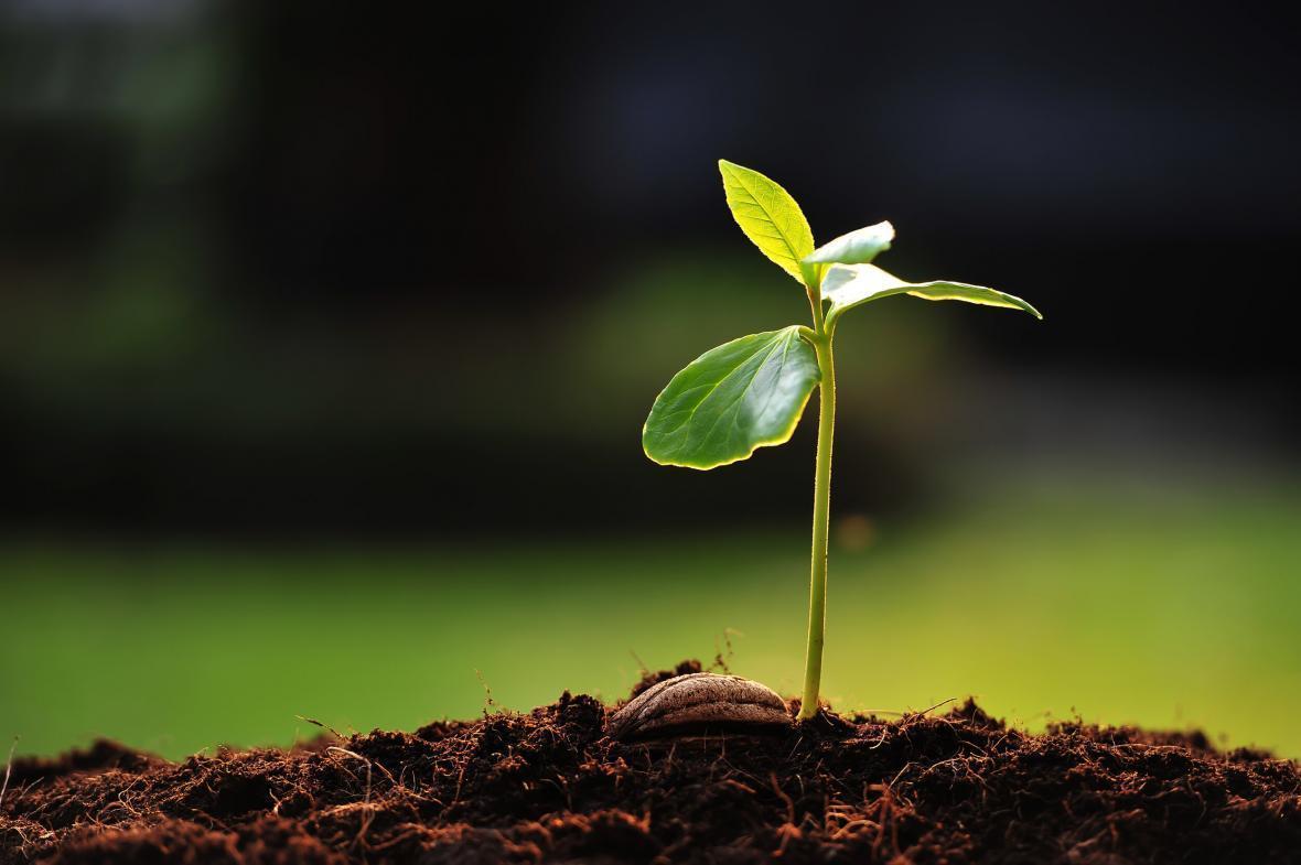 نانوحسگرهای نوری آلودگی خاک و گیاهان را رصد می&zwnjکند
