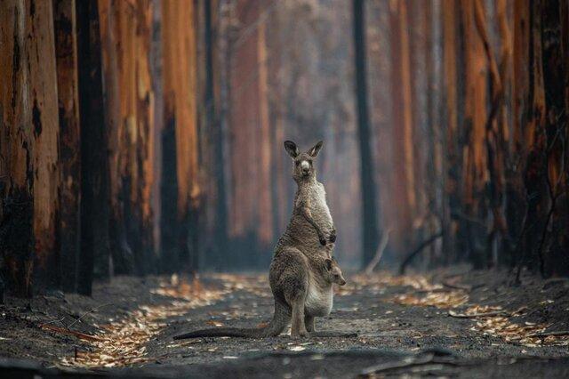 برترین عکس های سال با موضوع طبیعت