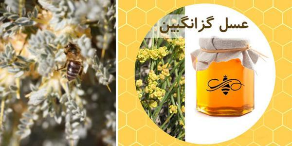 خواص عسل گزانگبین و فواید مصرف آن